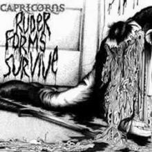 Capricorns: ruder forms survive